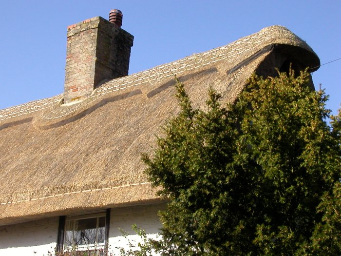 Animals in the thatch roof