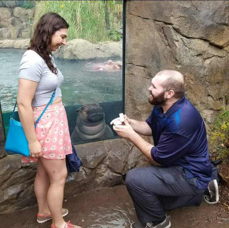 Proposal in a zoo